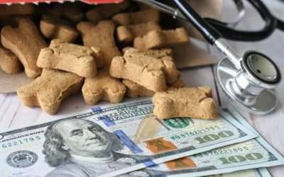 What Is Pet Insurance