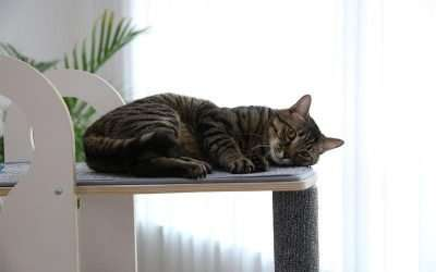 Why Do Felines Love Cat Trees