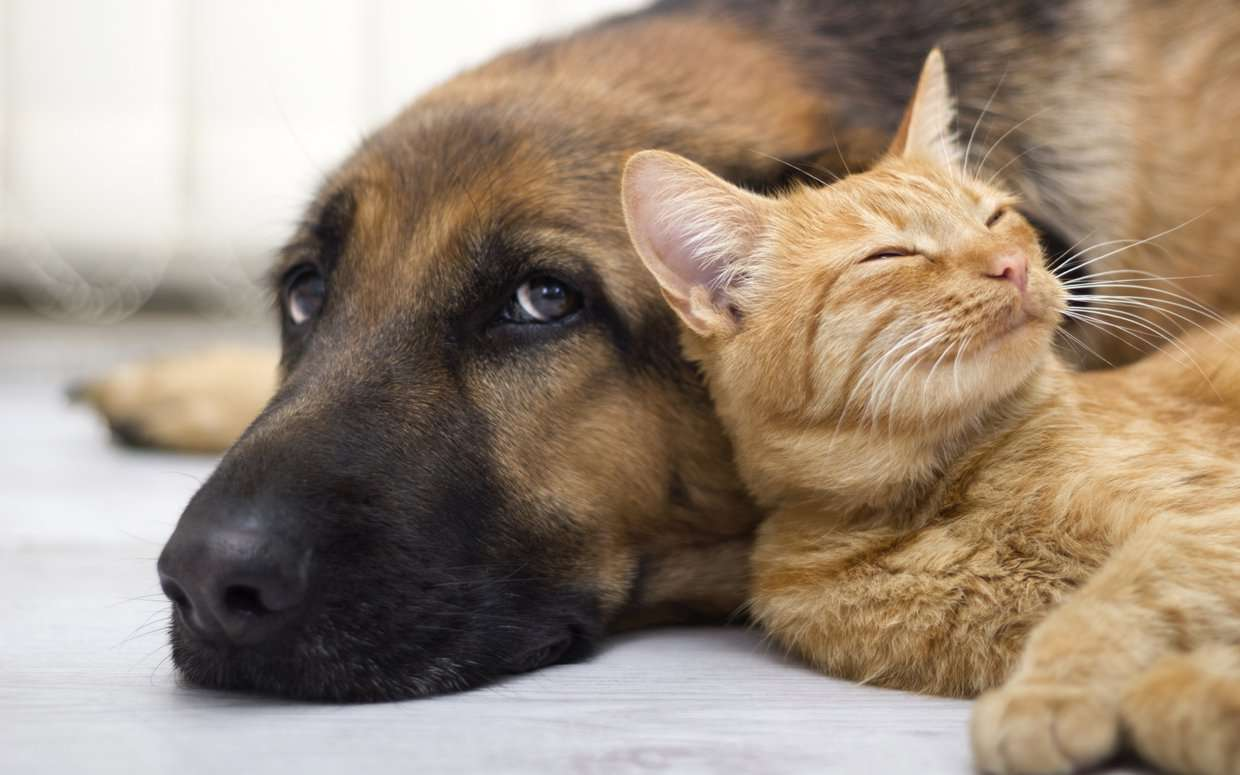 How To Introduce A Dog To A Cat