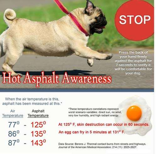 Hot Asphalt And Your Dogs Paws