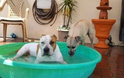 Summer Time And Your Pets