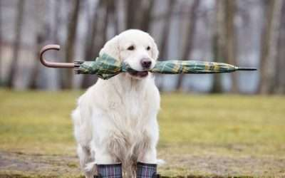 Can Weather Affect a Dog's Behavior